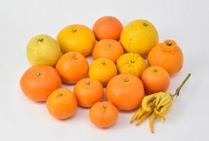 柑橘集合_小