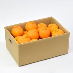 不知火_5kg_550