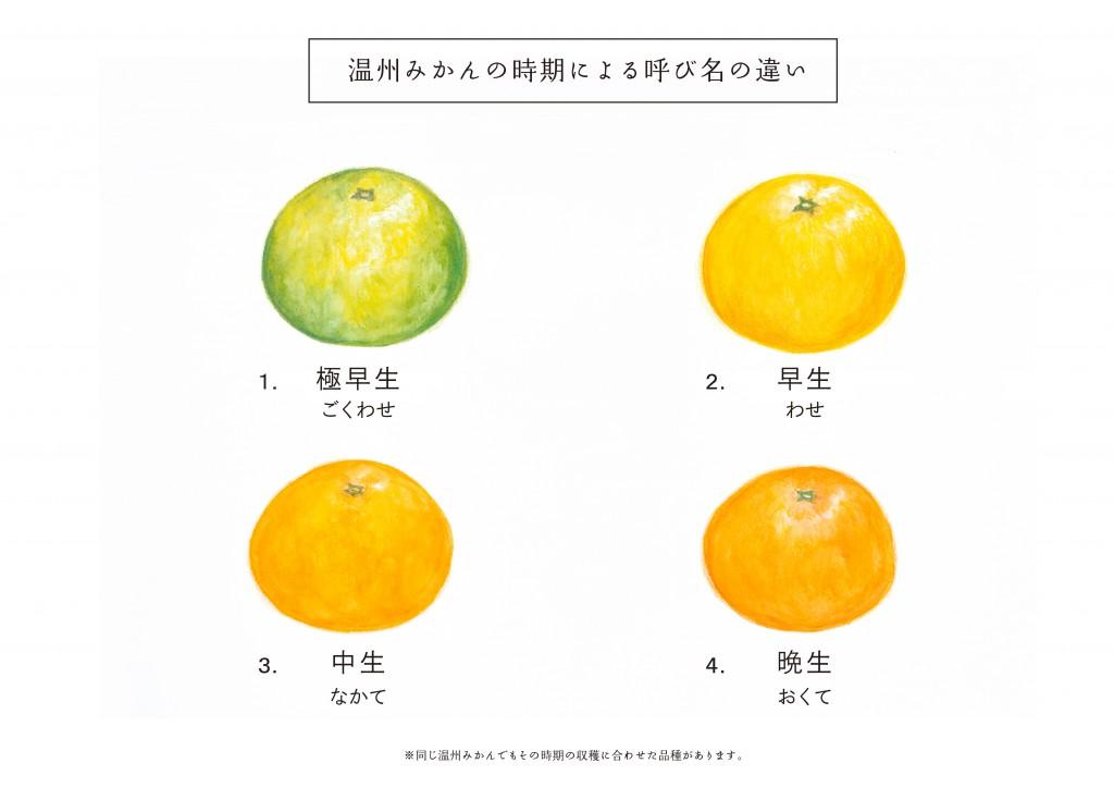 温州みかんのこと_know-how_01